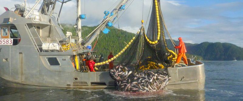 Interested Salmon Buyers: Request for Proposals